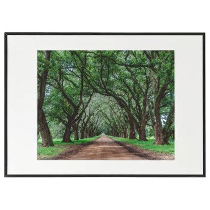 evergreen plantation luisiana usa django unchained